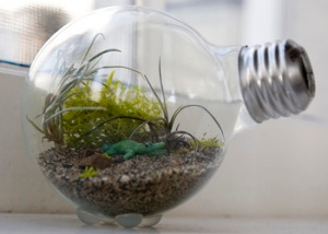 home made terrarium