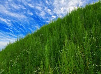 green-land